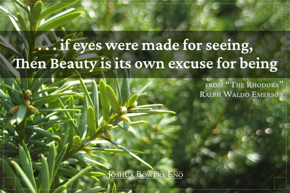 Quote from The Rhodora over image of fir needles